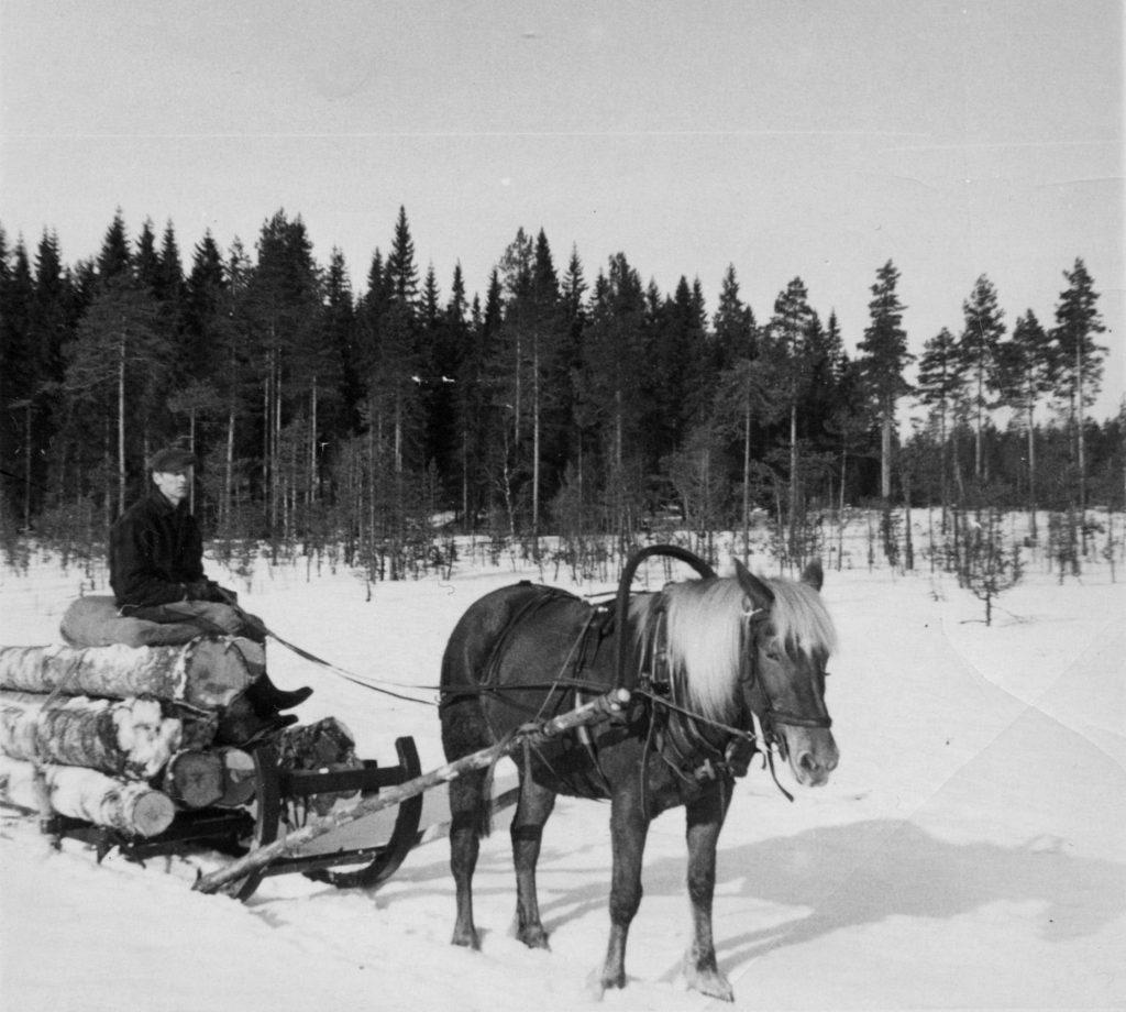 Heikki Rinteelä ajaa vanerikoivua Sievi-tammallaan Korpilahden Moksissa 1964. Kuva: Olavi Rinteelä.